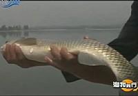 《渔我同行》第259集 坚守长城水库钓鱼视频
