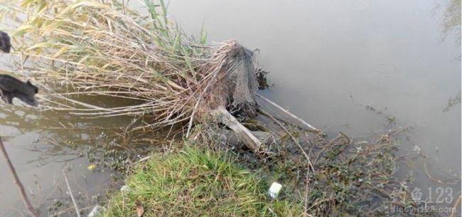 冬季周末相邀出钓私人鱼塘钓得大草鲤鱼