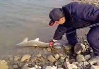 《水库钓鱼视频》大叔冬季水库钓鱼意外钓获大草鱼