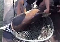 《渔乐生活》第67集 泰国探钓行垂钓金线鱼斩获湄公鲶