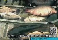 《钓鱼视频》美国中西部钓鱼视频
