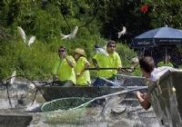 《垂钓对象鱼视频》美国鲤鱼成灾招陆军对抗实拍视频
