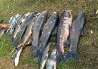 哥钓的不是鱼是耐心和中鱼那一刻的喜悦