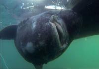 牛人仅凭一人一杆之力钓起千斤巨鲨