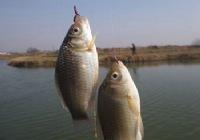 与钓友一起野塘冬钓鲫鱼在娱不在鱼