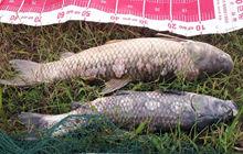 钓鱼狂人97天狂拉米级河中巨物