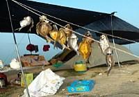 夏季垂钓鸭河水库渔获爆箱最后晒鱼干