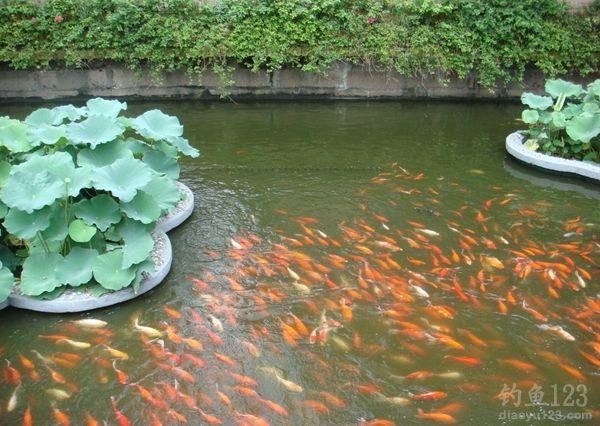 夏季池塘釣魚