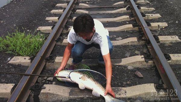 38斤大草鱼上岸