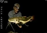 《河中巨怪》第三季 第7集 狼鱼