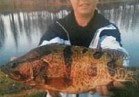 江河野钓6斤多的大鳜鱼