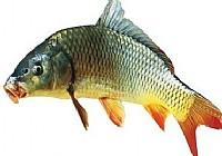 清明事后好钓鱼升温一度钓深两寸