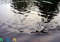夏秋季节水库钓鱼技巧以及常用鱼饵配方