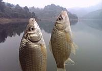 钓鱼必备的要领