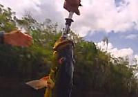 《荒野垂钓》第11集 亚马逊孔雀鲷