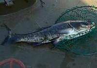 《极限钓鱼》第三季 第3集 中国的千岛湖和龙虎山