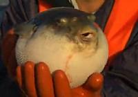 《极限钓鱼》第三季 第8集 日本溪流钓出海夜钓