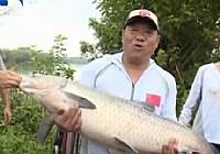 《水库钓鱼视频》王桂龙水库钓大青鱼