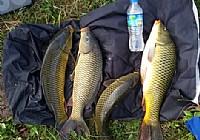 水库使用玉米粒垂钓野生黄金大鲤鱼