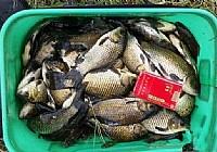 秋季垂钓白马河长竿短线狂钓30斤野生大鲫鱼