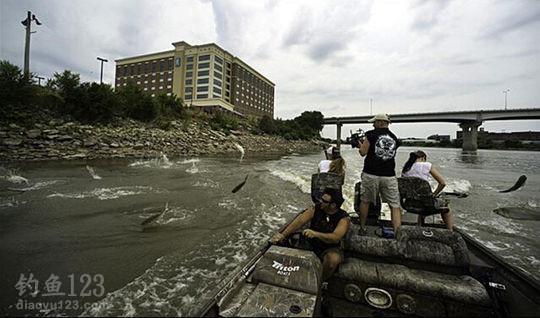 亚洲鲤鱼在美国疯狂繁殖