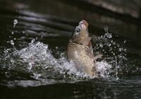 垂钓对象鱼视频