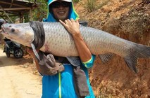 八米长竿黑坑钓获38斤重大青鱼
