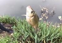 应对春季垂钓鱼上浮的实用小技巧