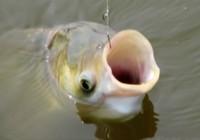 钓鲢鱼水深钓几米才合适
