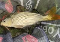 夏季钓大鱼的窝料制作方法