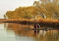 入秋后四种常见对象鱼的饵料调整