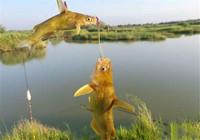 这黄颡鱼钓法简直无敌,天一热最好用,三天两头就想钓