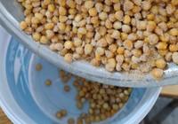 简单又实用的发酵玉米窝料制作过程。