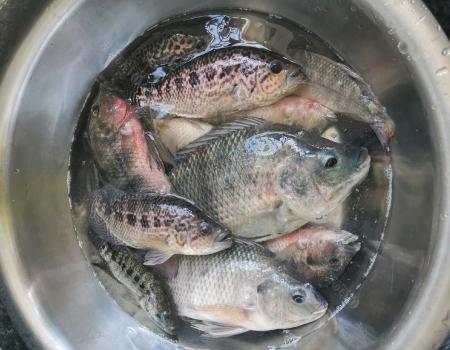 何以解忧,唯有钓鱼,退水河沟狂拔……