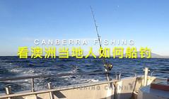 《全球钓鱼集锦》澳洲当地人如何钓鱼?活饵拖钓金枪,太刺激啦!