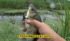 《缘鱼》2米长线挂蚯蚓钓草边,鲫鱼排着队的上钩!