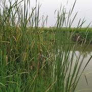 野塘探钓系列:一场秋雨一场寒,一竿一线提大板