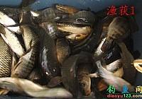 吴二哥一家爽钓千岛湖收获多种淡水鱼